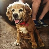 Photo for Looking For A Pet Sitter For 1 Dog In San Diego