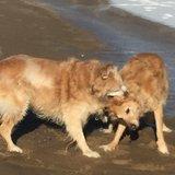 Photo for Dog Walking