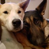 Photo for Two Dogs Needs Pet Sitter