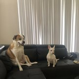 Photo for Looking For A Pet Sitter For 2 Dogs In Hollywood