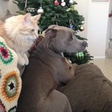 Photo for Sitter Needed For 2 Dogs, 1 Cat In Valencia