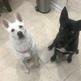 Photo for Occasional Dog Walker/Sitter, Gas Reimbursement, And Flexible Hours