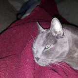 Photo for Looking For A Pet Sitter For 2 Cats In Mount Laurel