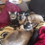 Photo for Reliable Cat Sitter For In-Home Visits