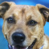 Photo for Boarding Needed For 1 Dog In Hialeah