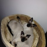 Photo for Looking For A Pet Sitter For 2 Cats In The Feasterville Trevose Area.