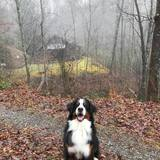 Photo for Looking For A Dependable House Cleaner For Family Living In Sylva