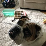 Photo for Looking For A Pet Sitter For 1 Dog In Fairport