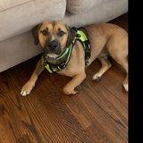 Photo for Dog Walker/Company