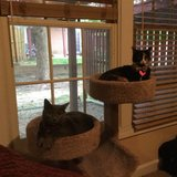 Photo for Looking For A Pet Sitter For 2 Cats In Berlin