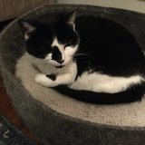 Photo for Looking For A Pet Sitter For 1 Cat In Bethesda