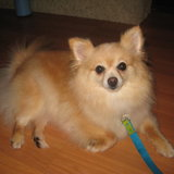 Photo for Walker Needed For 1 Dog In Centreville