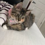 Photo for Sitter Needed For 1 Cat In Davenport