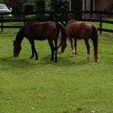 Photo for Sitter Needed For 2 Horses In Longwood