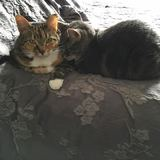 Photo for Cat Lover, Gentle, Sensitive Sitter
