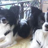 Photo for Walker Needed For 2 Dogs In Daytona Beach