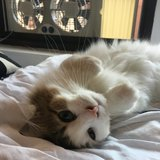 Photo for Sitter Needed For 1 Cat In Brooklyn