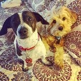Photo for Walker Needed For 2 Small Dogs In Parker