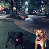 Photo for Looking For A Pet Sitter For 2 Dogs In Chicago