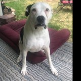 Photo for Looking For A Pet Sitter For 1 Dog In Morrison