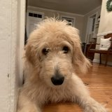 Photo for Walker Needed For 1 Dog In Allentown