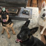 Photo for Looking For A Pet Sitter For 2 Dogs In Boyne City