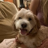 Photo for Looking For A Dog Walker For A Cockapoo In Stamford!