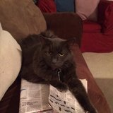 Photo for Wanted: Sitter For 1 Cat In Acton