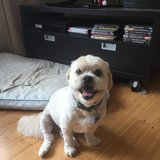 Photo for Looking For A Dog Walker/exerciser In Quincy