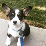 Photo for Puppy Care Giver, Can Train As Well Trainer