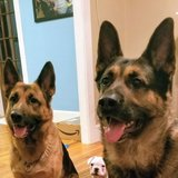 Photo for Visiter Needed For 3 Dogs In Providence