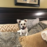 Photo for Looking For A Pet Sitter For 1 Dog In Mount Laurel