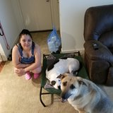 Photo for Looking For A Pet Sitter For 2 Dogs In Schaumburg