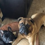 Photo for Looking For A Pet Sitter For 2 Dogs In Collegeville