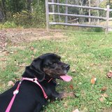 Photo for Sitter Needed For 1 Dog In Brookfield