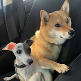 Photo for Looking For A FLEXIBLE Pet Sitter For 2 Sweet Puppies!