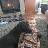 Photo for Boarding Needed For 1 Dog In Pleasant Prairie