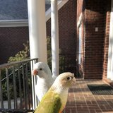 Photo for Looking For A Pet Sitter For 2 Birds In Raleigh