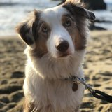 Photo for Walker Needed For 1 Dog In Walnut Creek