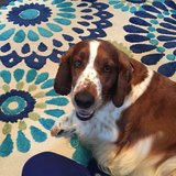 Photo for Sitter Needed For 2 Dogs In San Carlos