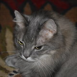 Photo for Sitter Needed For 1 Cat In Delaware
