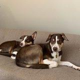 Photo for Housekeeper / Dog Nanny