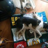 Photo for Callahan Looking For A Pet Sitter For 1 Dog, 1 Cat In Tempe
