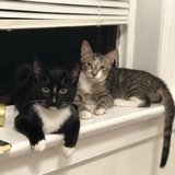 Photo for Looking For A Cat Sitter In West New York
