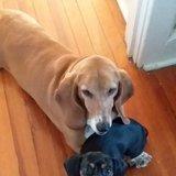 Photo for Trustworthy, Dog Lover Walker