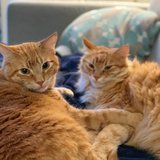 Photo for Boarding Needed For 2 Cats In Pittsburgh