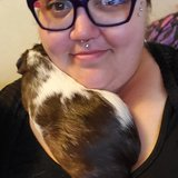 Photo for Housekeeper Needed For 2 Bed, 1 Bath Apartment In Portland.  I'm Disabled, Have 2 Guinea Pigs.