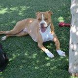 Photo for Dog Sitter/Walker Needed Mon -Fri Ongoing!