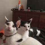 Photo for Looking For A Pet Sitter For 3 Cats In DeKalb
