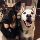 Photo for Dog Loving Sitter Needed!